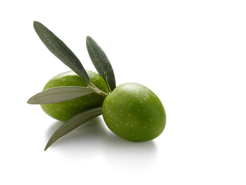 Olive Net Worth